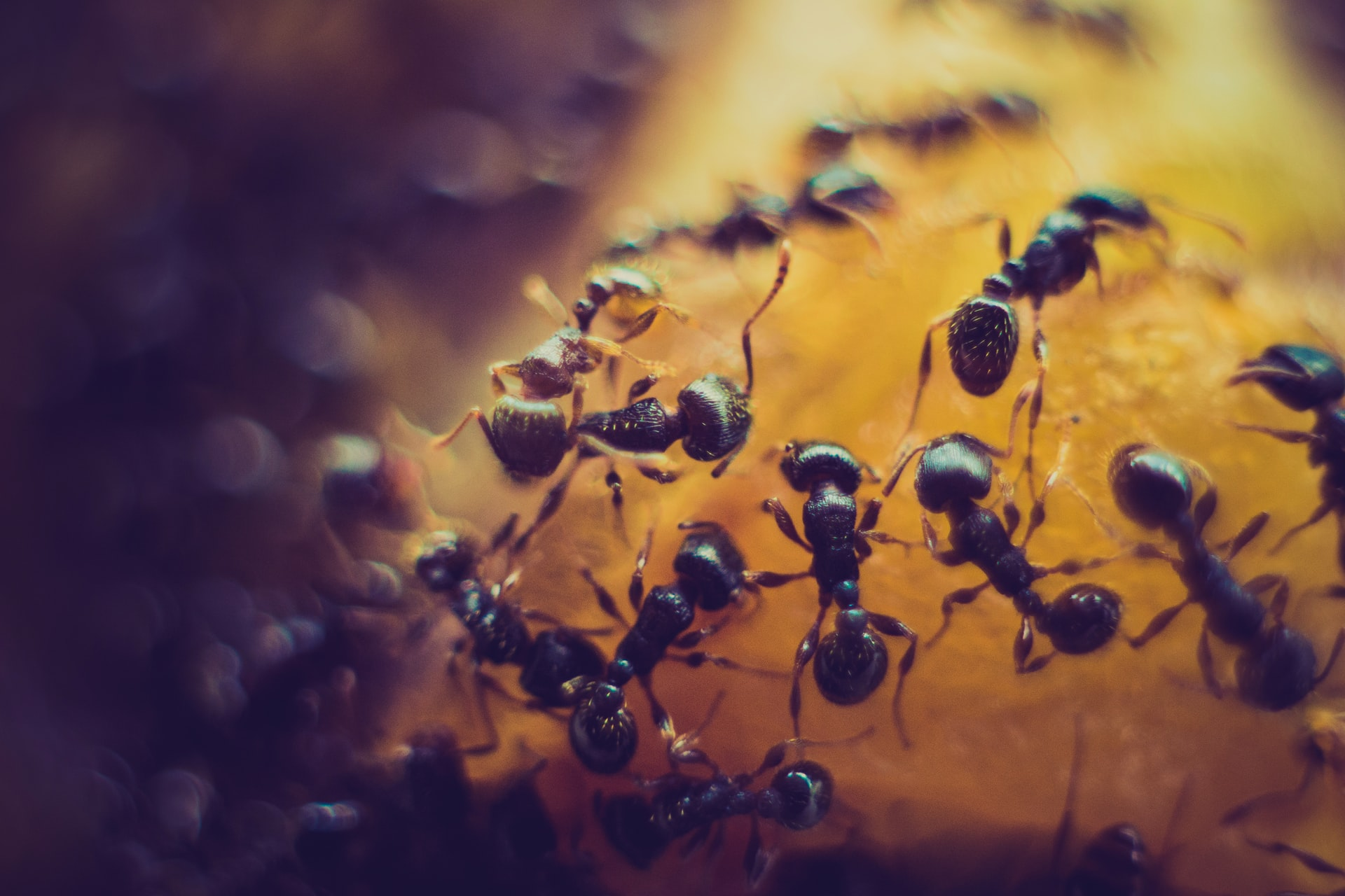 strange and unique food - ants